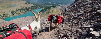 Men Who Hike With Goats